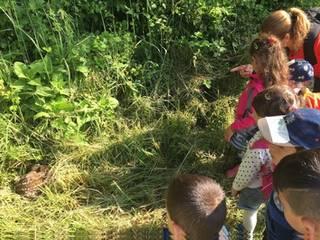 Kinder im Wald am Jauerling beobachten Tiere